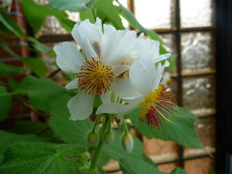 Фото домашних цветов цветущих белыми цветами 33