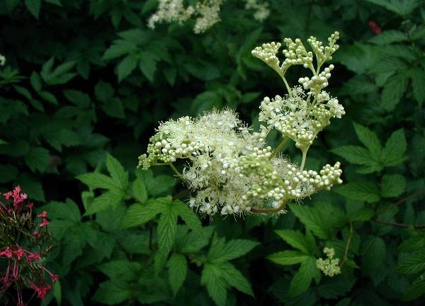 Лечебные травы фото и названия сборы трав растения