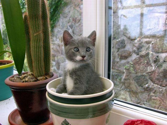 Кот съедает все цветы