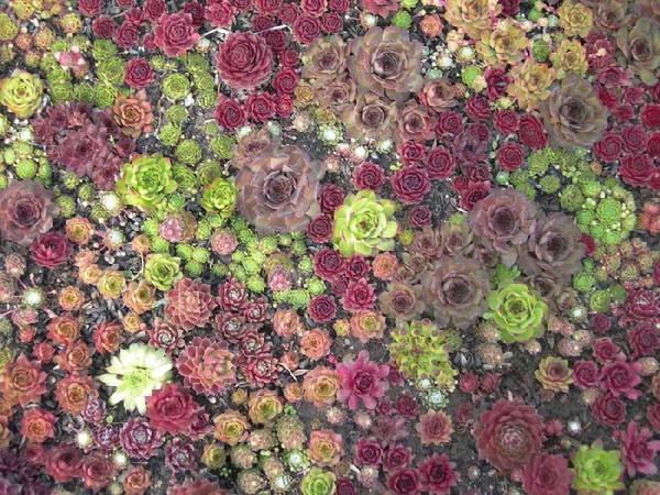 Какие цветы сажают на кладбище