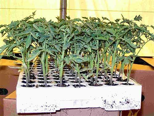 кофейная гуща применение как удобрение для комнатных растений отзывы