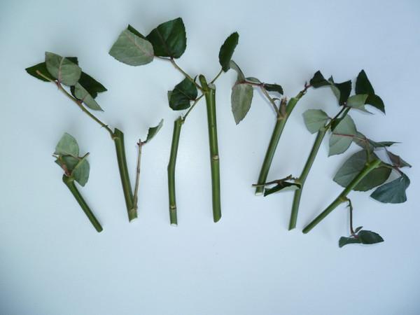 большой город пересаживать розы во сне ответы майл время полового акта