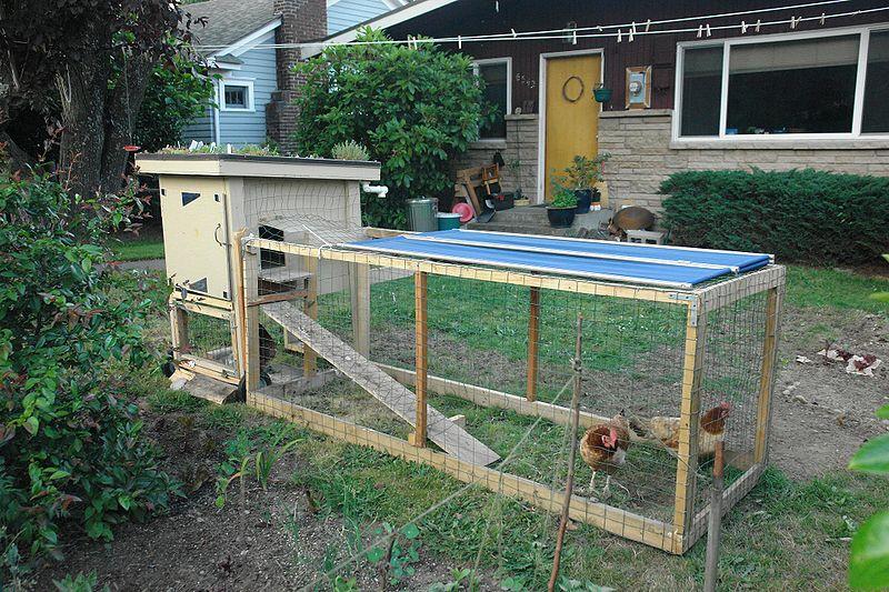 Например озеленить крышу курятника