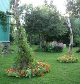 Цветы комнатные тенелюбивые фитония